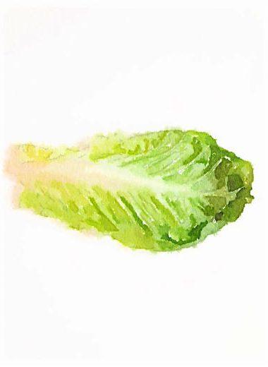 PageLines- lettuce.jpg